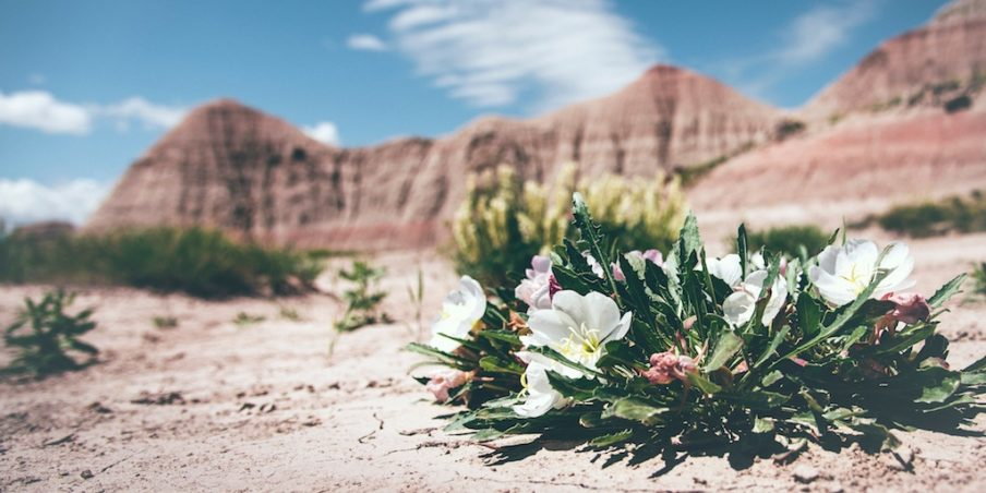 My life…as a blossom in a… barren desert?